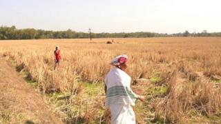 આસામનાં ખેડૂત