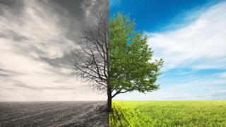 Засохшее дерево и зеленое дерево