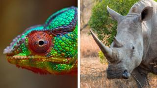Camaleón y rinoceronte
