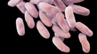 Drug-resistant bacteria