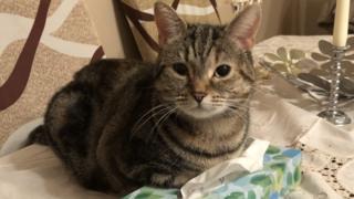 Kensi the cat