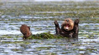 Beaver. Photo: Penny Palmer