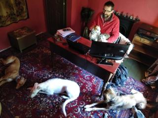 Man at desk with dogs