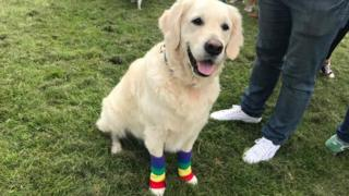 A dog wearing rainbow socks