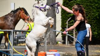 Laura Henry from Kinshaldy stables in Leuchars washes Denim ahead of The Royal Highland Show
