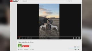 Hare coursing video on YouTube