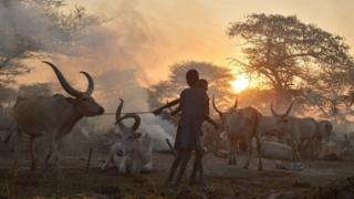 Boys lead a prized bull by a rope from a cattle camp at dawn at the town of Nyal, an administrative hub in Unity state, South Sudan on February 25, 2015.