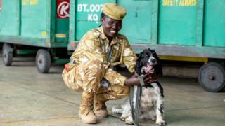 A uniformed dog handler with her springer spaniel at Jomo Kenyatta International Airport in Nairobi, Kenya