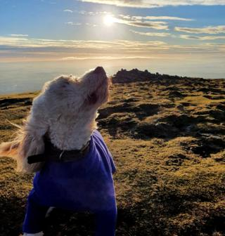 Dog with view from the Pentland Hills in the background
