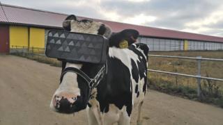 Корова в VR-очках
