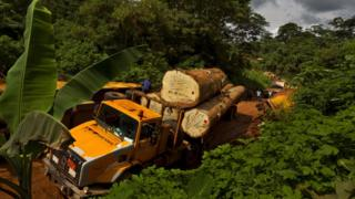 Lorry carrying tropical timber, file pic