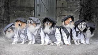Dogs dressed in waistcoats
