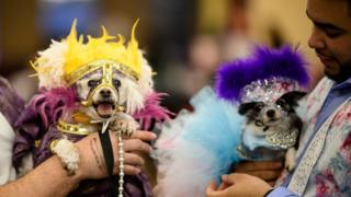 two dogs in Mardi Gras costumes
