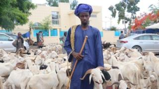 A breeder poses for a photo near sacrificial lambs at a livestock market within the Eid al-Adha preparations in Dakar, Senegal on July 28, 2020.