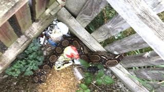 The snake stuck in the fence