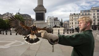 Matt Forward with his hawk in Trafalgar Square, 13 June 2020