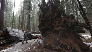 Árbol gigante destruido tras una fuerte tormenta