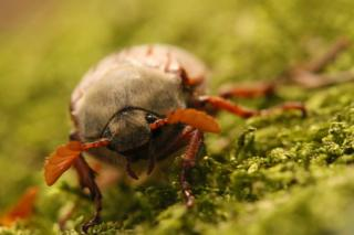A close up of a beetle