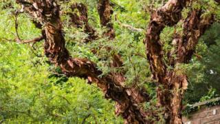 Filo pastry tree