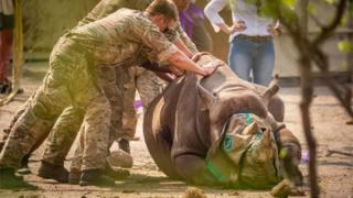 environment Undated handout photo issued by the Ministry of Defence (MOD) of a black rhino being transported to Malawi.