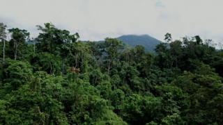عامل تخریب جنگلهای استوایی در زندگی روزمره