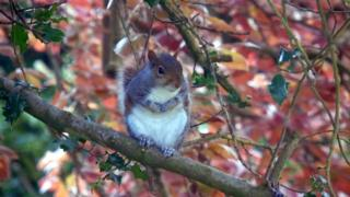 Autumn Squirrel by Lauren Smewing 16-18 years Highly Commended