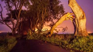 The tree fell onto the Bregagh Road near Armoy on Tuesday night