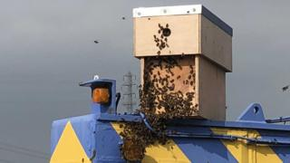 Bees on a crane
