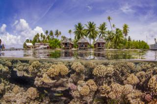 Healthy corals growing in front of a resort in French Polynesia
