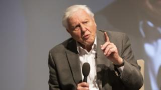 Sir David Attenborough says mounted-term parliaments lead to lack of local climate point of curiosity thumbnail