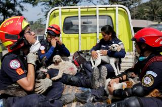 Firefighters rescue animals