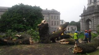 Tree collapses in Trinity College Dublin