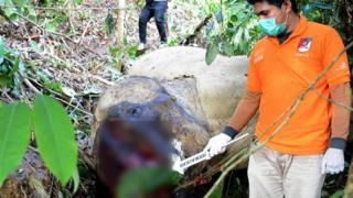 Semasa hidupnya, Bunta banyak membantu BKSDA Aceh menggiring gajah luar yang berkonflik di berbagai tempat.