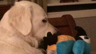 Molly the dog with pet toy