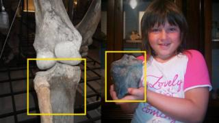 A composite shot of a woolly mammoth leg in a museum and Emma holding the bone