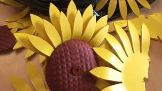 Damaged sunflowers