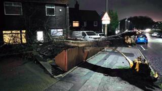 Aberdeen fallen tree