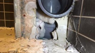 Cat stuck in soil pipe