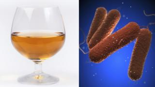 Mead and salmonella cells
