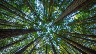 ماذا سيحدث لو اختفت الأشجار من على وجه الأرض؟