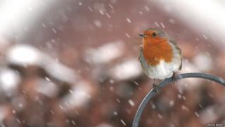 птичка под снегом