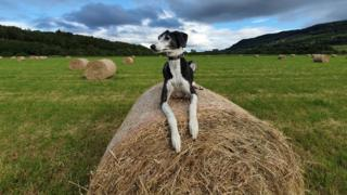 Colin Martin took this photo of his dog Shadow in Pitlochry when he jumped up on a hay bale