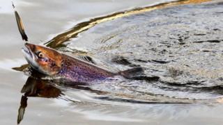 Oltadaki balık