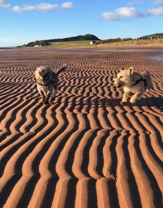 A view of the beach with 2 dogs running across small sand dunes