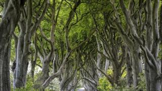 Grupo de árboles con hojas verdes en el camino
