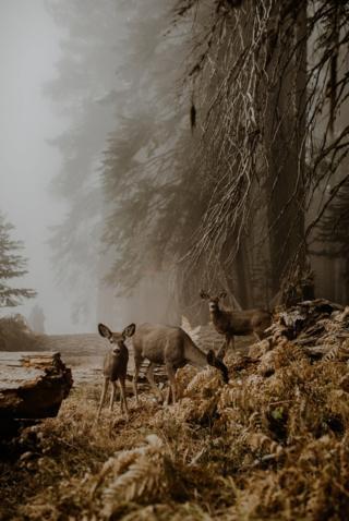 Deer in a wood