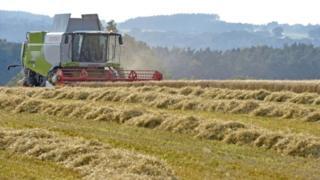 Combine harvester in Cumbria