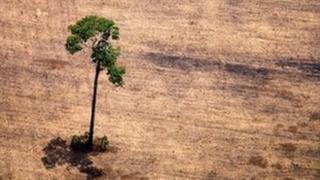В бассейне реки Амазонки на территории Бразилии леса вырубаются под плантации сои