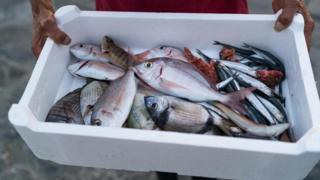 كيف تتأكد من أن الأسماك التي تتناولها آمنة؟