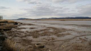 Tay shoreline near Newburgh